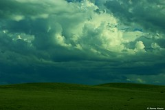STORMY FIELDS (smortaus) Tags: desktop camera new windows wallpaper sky color colour nature clouds digital rural landscape photo bush mac image screensaver oz edited background sony country snapshot australian australia wallart ranges nsw remote slideshow dslr australianlandscape snowymountains theland australianbush berridale australianimages ruralaustralia landofoz a350 australianphotography australianrural someofmybestwork southernland bestofaustralia iphonewallpaper thisisaustralia elitephotography australianphotos 142mp sonydslra350 sonyalphaa350 danielhayes photoslandscapes imagesofaustralia photosofaustralia smortaus dannyhayes berridalenswaustralia bouldercountry photobydannyhayes photosfomaustralia landscapeofaustralia mountiansaustralia australianmountians mountiancountry australainimage landscapesofnsw coolunusualwallpapersforwindows helloworldthisisaustralia