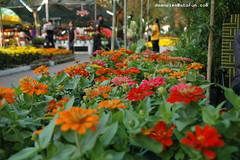 nh hoa! (chedoanvien) Tags: flowers photography hoa langthang
