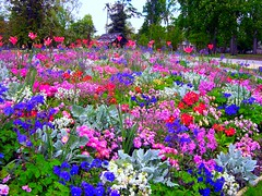 massif floral (philippejack) Tags: park flowers france flower nature fleurs garden landscape spring bordeaux jardin printemps gironde aplusphoto favoritegarden