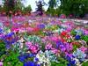 massif floral (philippejack) Tags: park flowers france flower nature fleurs garden landscape spring bordeaux jardin printemps gironde aplusphoto favoritegarden