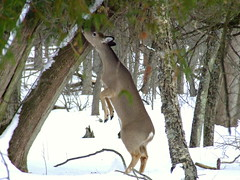Stretch!!!! (cminer52) Tags: natureselegantshots portalwisconsinorgselected portalwisconsinorg022509
