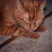 Fat Cat_1