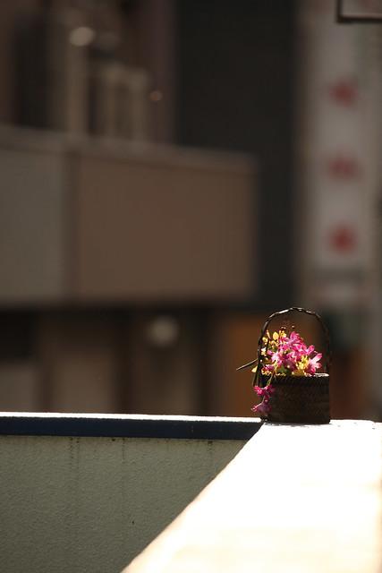 公園脇の花鉢