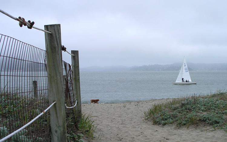 Dog, Sailboat at Golden Gate