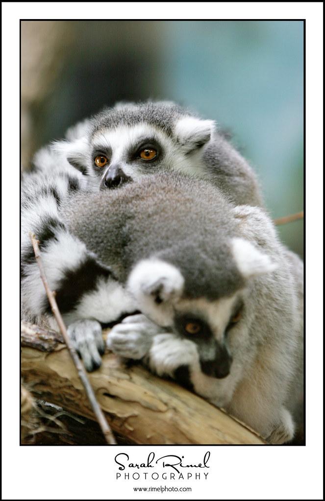 feb zoo 20