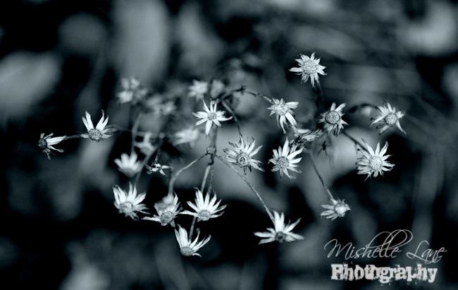 Winter Weeds