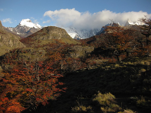 trees and mountains. El Chalten.