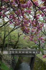 Peaceful Kyoto