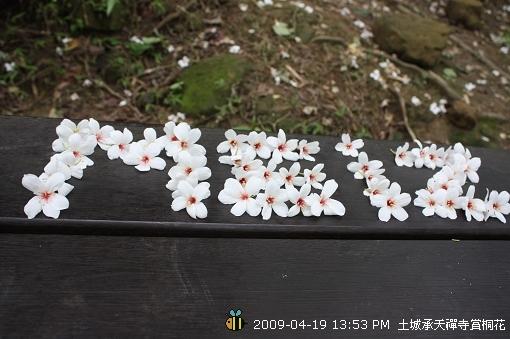 09.04.19 一探土城承天寺桐花花況 (11)