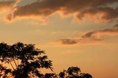 banana sunset (d3l) Tags: sunset red tree leaves silhouette clouds