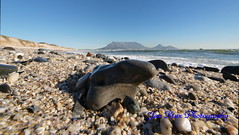 pebbles, the sea and the mountain (jan-krux photography) Tags: sky water landscape southafrica stones capetown pebbles e3 superwideangle zd woodbridgeisland 714mm mountaun absolutelystunningscapes