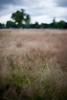 grassland (jingjok) Tags: london grass dof d3 kensingtonpark 50mmf14d