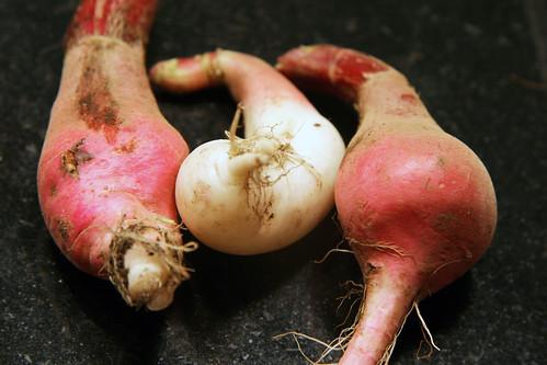 mishapen radish