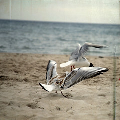 rgen (reverie103) Tags: old summer seagulls texture beach nature water birds animals photoshop germany square flying sand europe waves footprints shore canon5d rgen lesbrumes