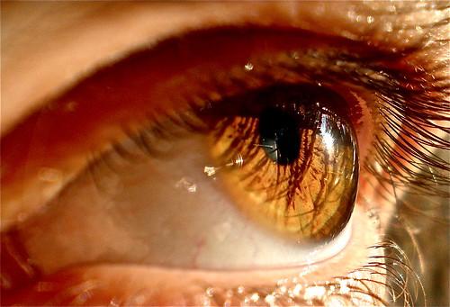 honey eyes honey golden eyees