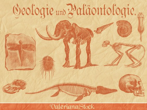 Paleontology Brushes for Gimp Preview