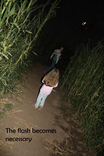 corn maze - dark