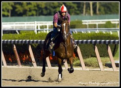 Winchester (EASY GOER) Tags: horses horse sports animals racetrack digital canon track exercise belmont racing athletes races thoroughbred tb equine thoroughbreds clement secretariat equines nyra tbracing christopheclement