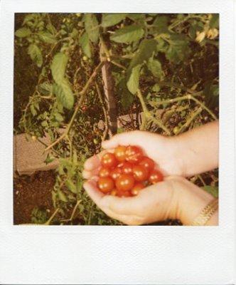 handful of summer