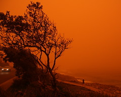 Sydney Dust Storm - Walking Through The Red (bg_os) Tags: ocean trees red storm dusty beach grass sand manly sydney australia surfing beaches curl dust northern freshwater sydneydust