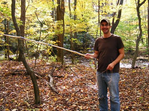 Beech tree rod