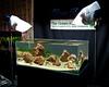 Oliver Knott Aquascaping Demo Day (Stu Worrall Photography) Tags: fish rock aquarium oliver tank machine shrimp hc petrified knott aquascape the planted wrexham riccia aquascaping tgm hairgrass stuworrall ukaps ukapsorg stuworralltgmthegreenmachinegreenmachineoliverknott stuworralltgmthegreenmachinegreenmachineoliverknottdemodayaquascapingaquascapeadanatureaquariumplantedfishtankaquarium