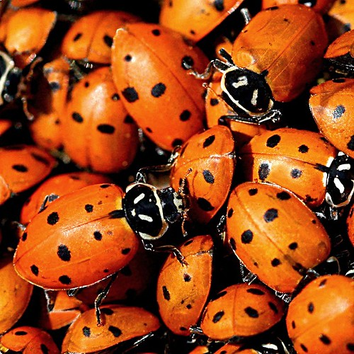 Lady Bug Cluster by LaVeta Jude
