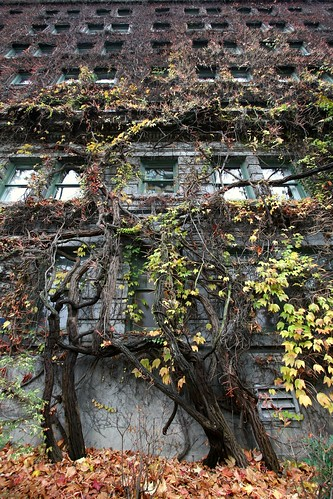 the-sylvia-vines