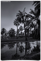 (A.Alwosaibie) Tags: b light bw water photo nikon shot w spot land  ksa  2011 alhassa              alahsa   aalwosaibie