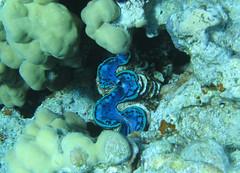 138_3877 (LarsVerket) Tags: egypt snorkling fisk undervannsfoto