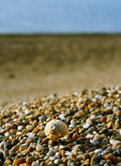 On Chesil Beach (@Doug88888) Tags: pictures ocean new uk sea england beach rock stone digital canon eos coast photo shot image photos south united year sunday picture shell gimp kingdom images pebble coastal photograph buy dslr purchase chesil conch 400d doug88888