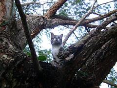Ahora un gato salvaje