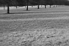 blenheim landscape #3: trees/shadows
