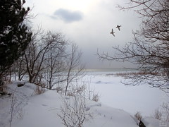 Something So Right (flipkeat) Tags: winter lake snow ontario canada port landscape outdoors geese photo different awesome scenic canadian explore credit birdsinflight wintery justonelook cans2s theunforgettablepictures thebestofday gnneniyisi natureselegantshots absolutelystunningscapes rubyphotographer dsch50 100commentgroup naturescreations