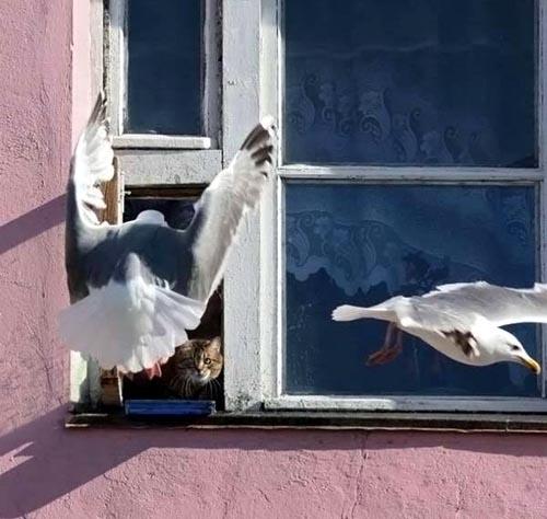 cat guards window