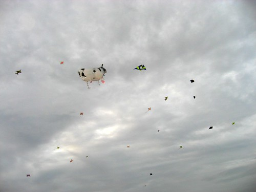 the cow jumped over the kites