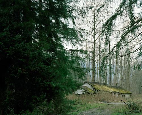 sawdust mountain