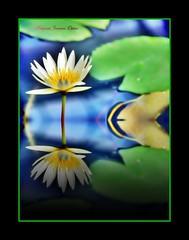 **I Offer To ALL WOMEN OF  FLICKR** (♫ Photography Janaina Oshiro ♫) Tags: naturaleza flower macro nature japan azul digital women lotus natureza mulher flor reflexo nikond80