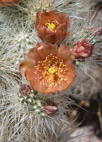 Cactus flower by you.