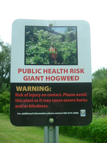 Hogweed Warning
