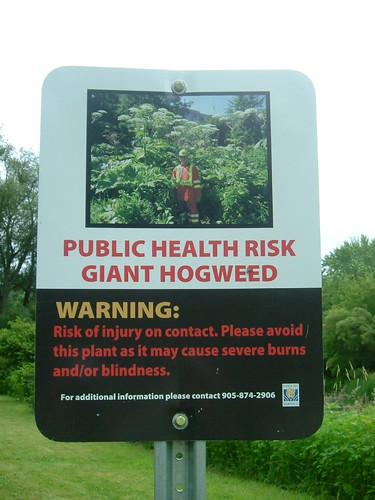 Hogweed Warning