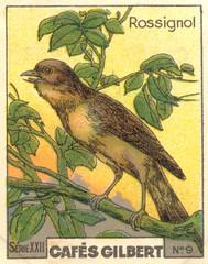 gilbert oiseau 8