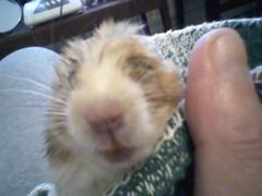 Cutie and Hammy. 2009. 007 (I love Hammy) Tags: hamsters
