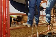 Riders And Bulls Meet (emilio labrador) Tags: cowboys facetoface cowboyboots momentoftruth bullrope cowboyequipment rodeoridersandbulls lastingencounters