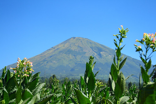 Gunung-Sindoro(2)