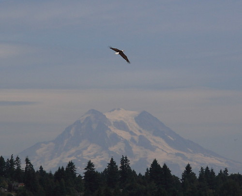 Bald Eagle with Mount Rainier