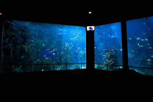 SeaWorld-1022