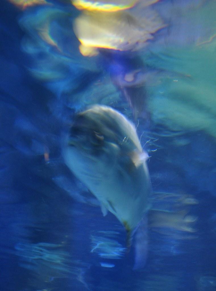 Fish Blur 2