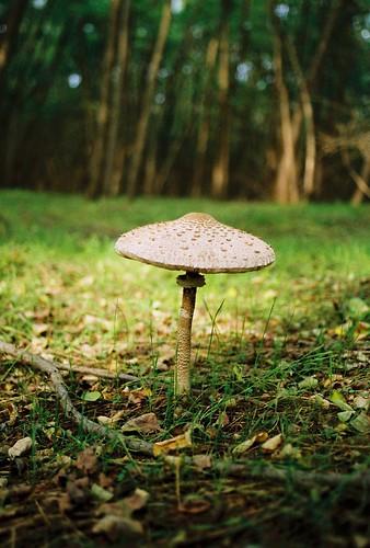 [parasol]