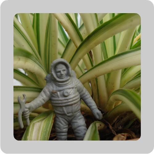 astronauta arreglando helechos